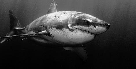sharktank_featured